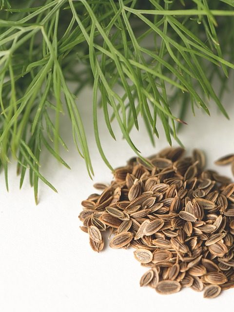 Food Spice Herb Kapormag Plant Dill Flower Dill